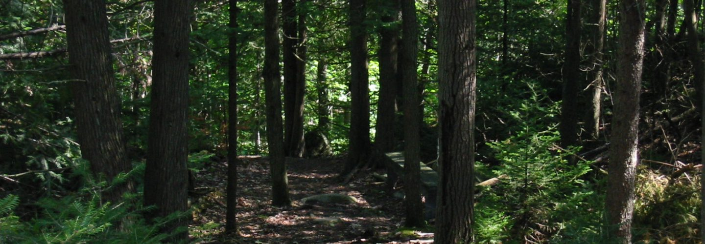 Hiking Trails at Gordon's Park on Manitoulin Island