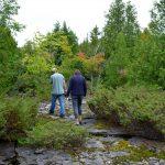 Escarpment along Gordon's Park Hiking Trails on Manitoulin Island