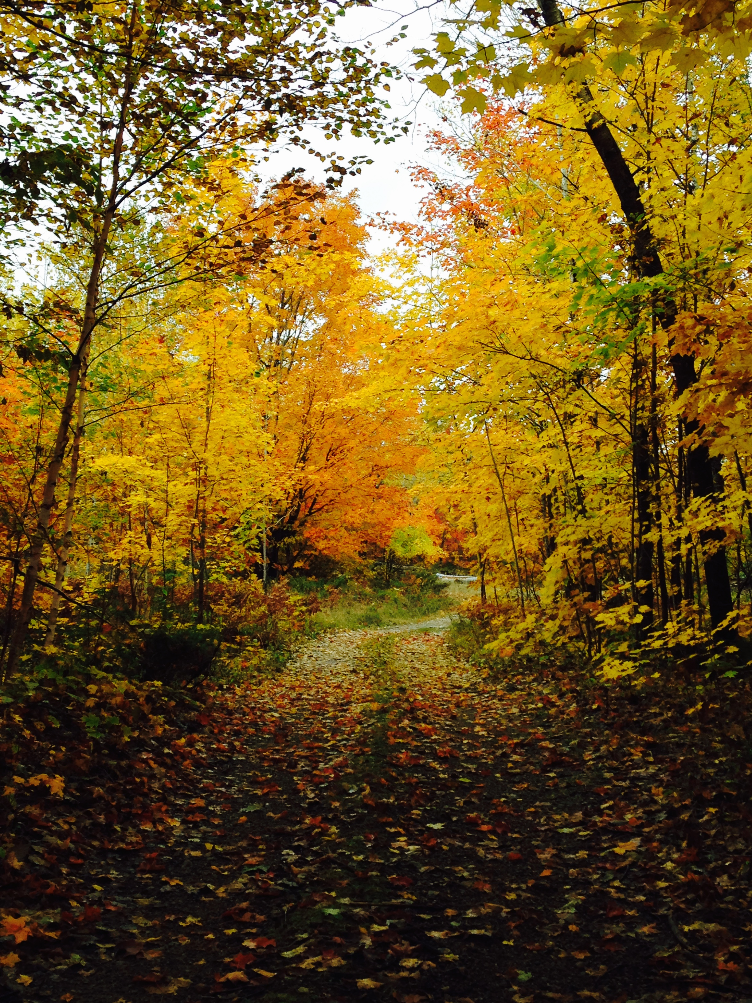 Fall colours on Gordon's Park hiking trails on Manitoulin Island