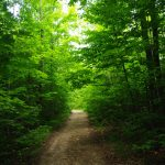 Hiking trails at Gordon's Park on Manitoulin Island- Mother Nature